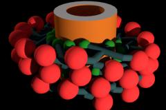 Dynamin Polymer