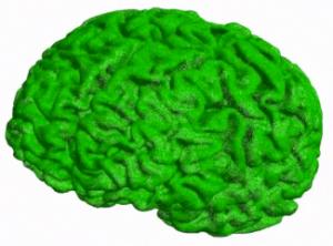 brainseg
